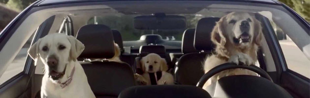 Driving Dogs!