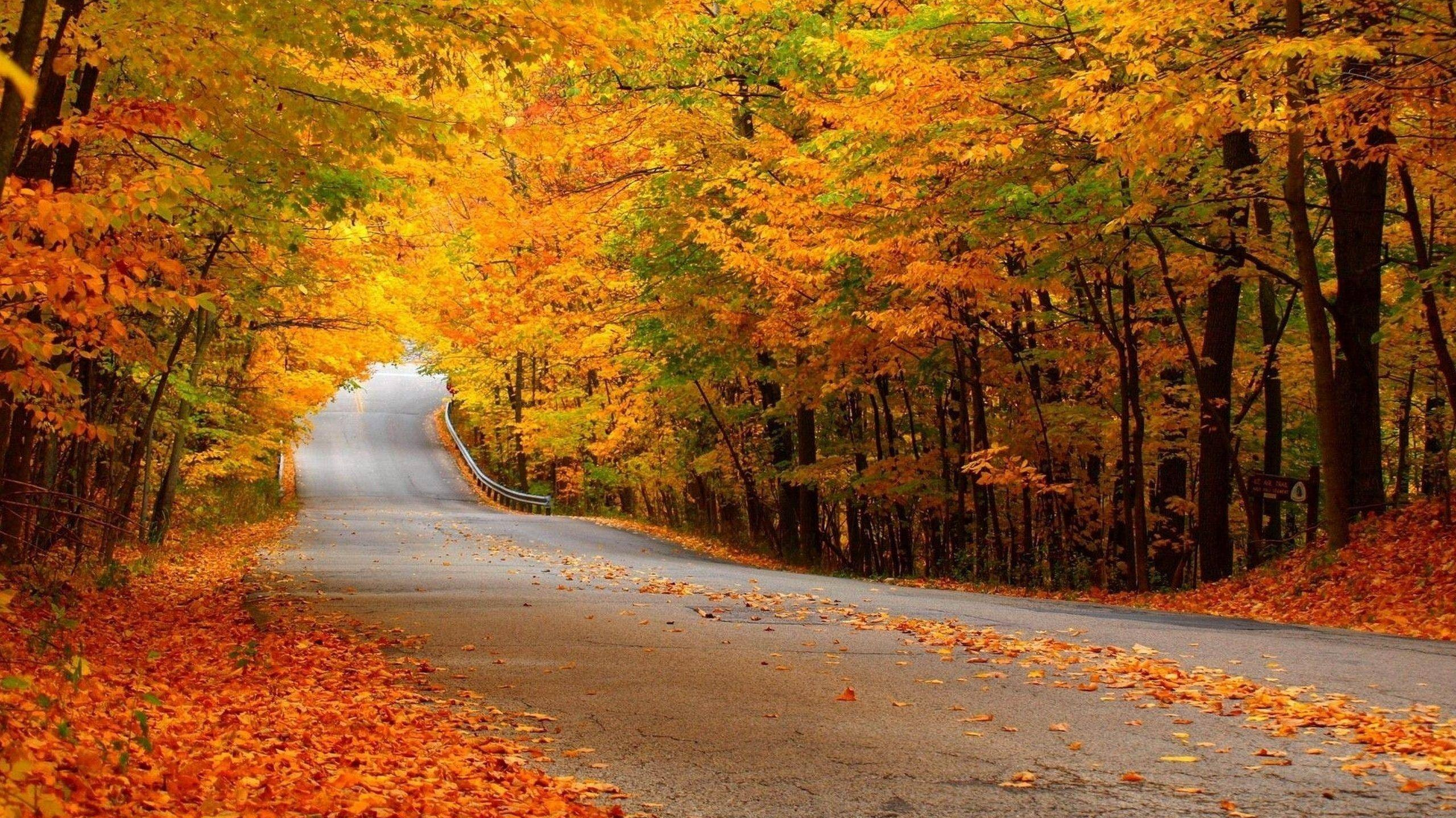 beautiful roads, road beauty, car travel, road beautiful place, the most beautiful, road trip