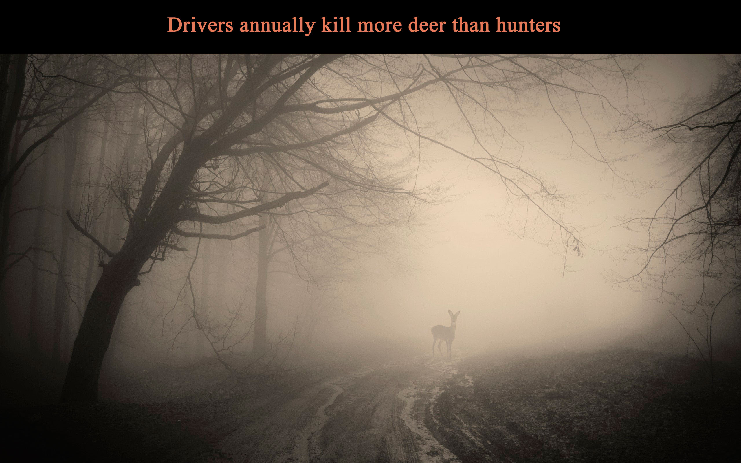 car, driver, driver road, driver kill deer